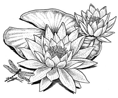 Hawaiian Flower Tattoo Designs Picture besides Dreamcatcher svg also American Indian Petroglyph Symbols further Wonderouswaterlily further Plumeria And Hibiscus E2e. on southwest home designs